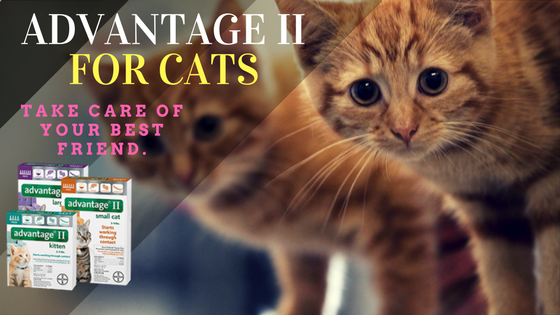 Advantage Ii For Cats Best Flea Treatment For Cats My