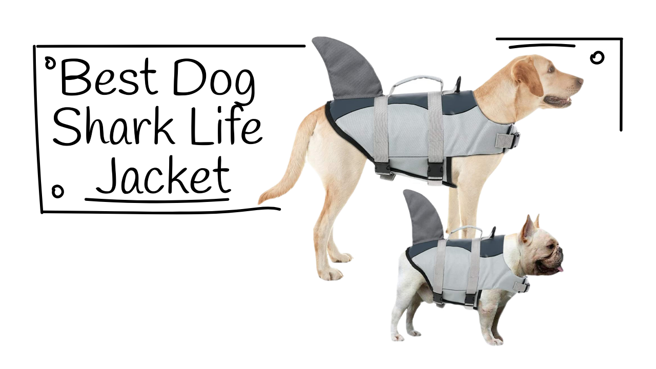 Best Dog Shark Life Jacket