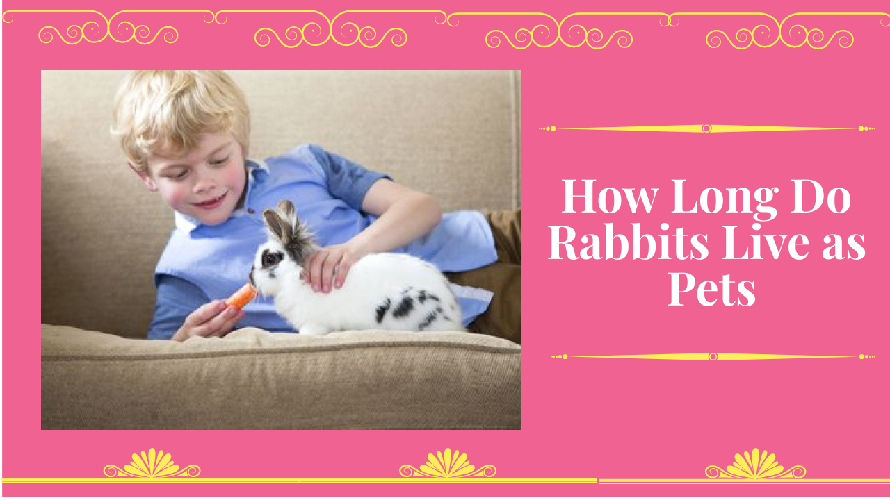 How Long Do Rabbits Live as Pets
