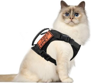 Best cat harness and lead