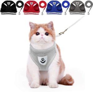 Best cat harness for kittens