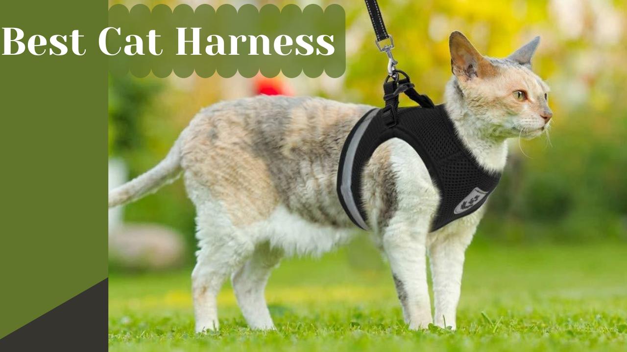 best cat harness
