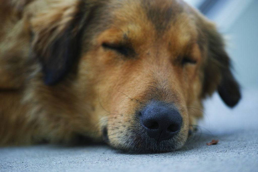 how much does it cost to cremate a dog