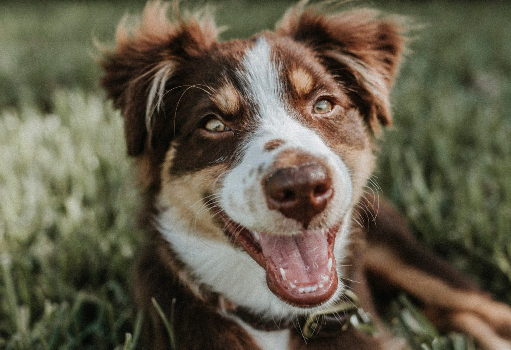 why does my dog keep sneezing